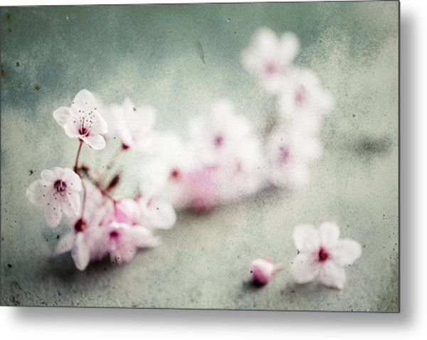 Metal Print featuring the photograph Cherry Blossoms by Nicole Young