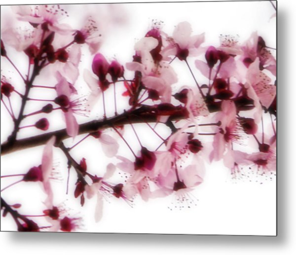 Cherry Triptych Center Panel Metal Print