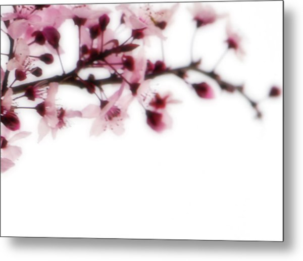 Cherry Triptych Right Panel Metal Print