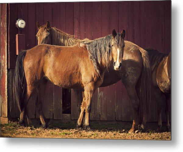 Chestnut Horses Metal Print