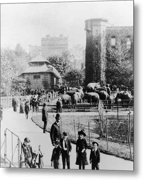 Children In Central Park Zoo Metal Print by Hulton Archive