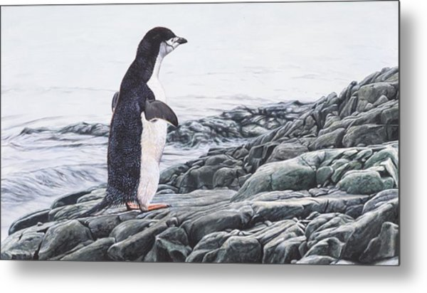 Metal Print featuring the painting Chinstrap Penguin On A Rock By Alan M Hunt by Alan M Hunt