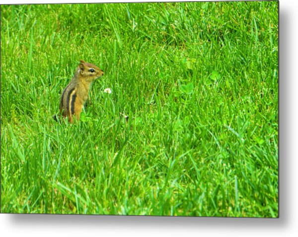 Chipmunk And The Flower Metal Print