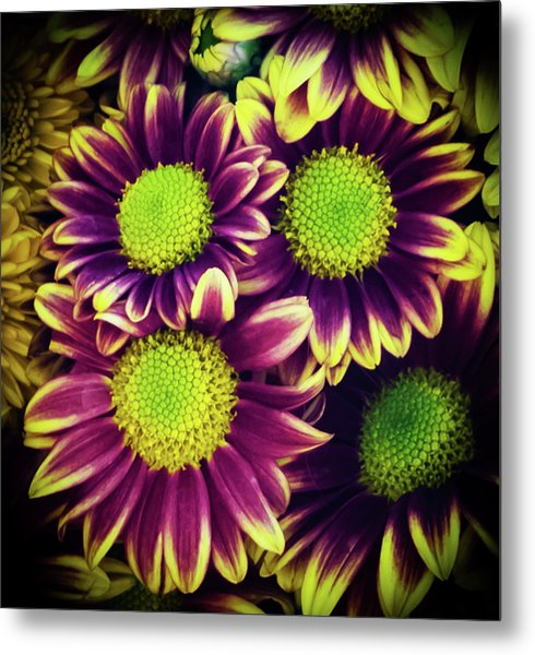 Chrisantemum Metal Print