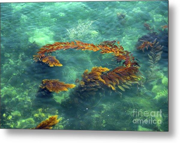 Circle Of Glistening Seaweed Metal Print