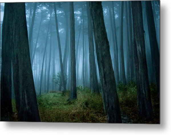Clearing In Cypress Tree Forest Metal Print by Siri Stafford