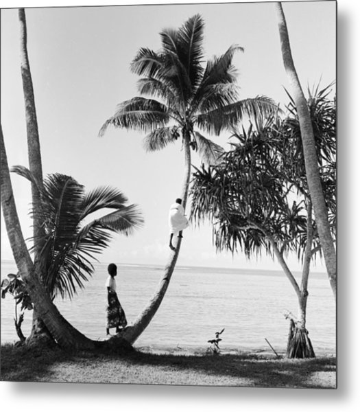 Climbing For Coconuts Metal Print