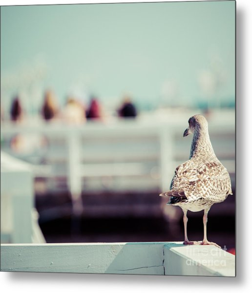 Close-up Of A Seagull In Sopot Pier Metal Print