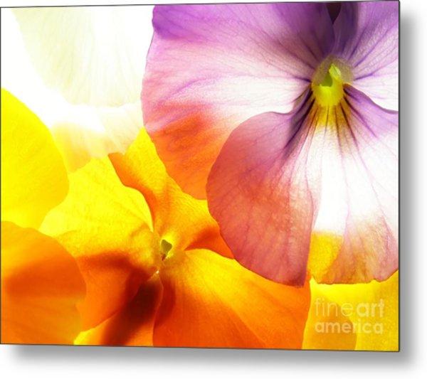 Close-up Of Colourful Viola Tricolor Metal Print