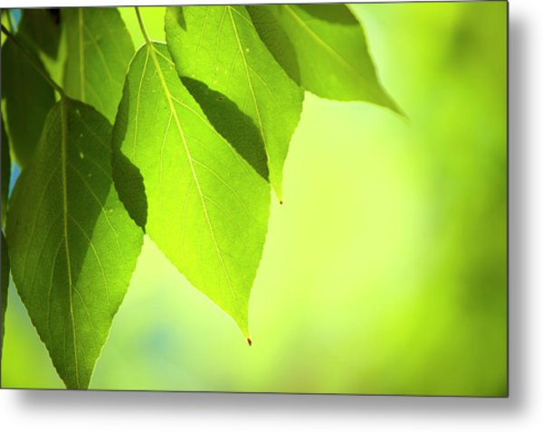 Close-up Of Fresh Green Leafs Metal Print