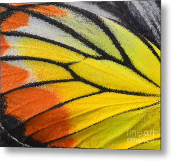 Close Up Of Painted Jezebel Butterflys Metal Print by Super Prin