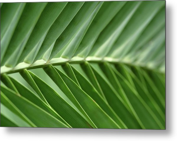 Close-up Of Sago Palm Leaves Metal Print