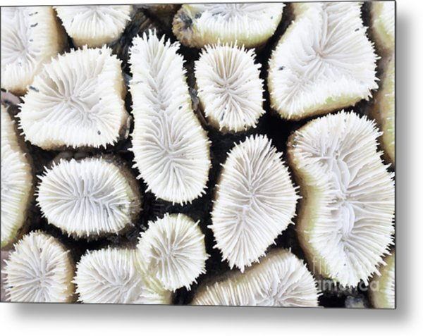 Close-up Of White Coral Metal Print
