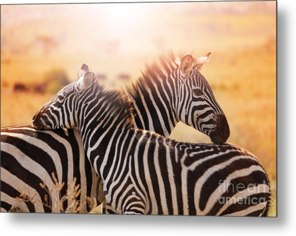 Close-up Portrait Of Mother Zebra With Metal Print