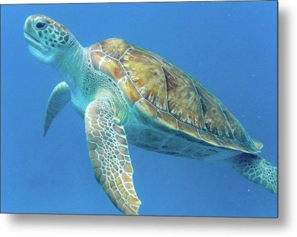 Close Up Sea Turtle Metal Print