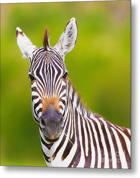 Closeup On Beautiful Zebras Head Metal Print