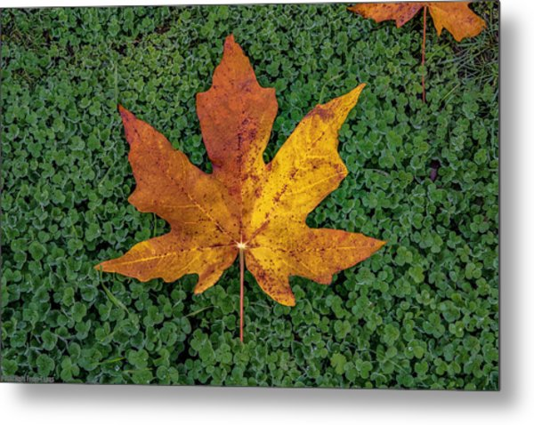 Clover Leaf Autumn Metal Print