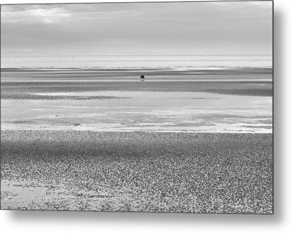 Coastal Brown Bear On  A Beach In Monochrome Metal Print