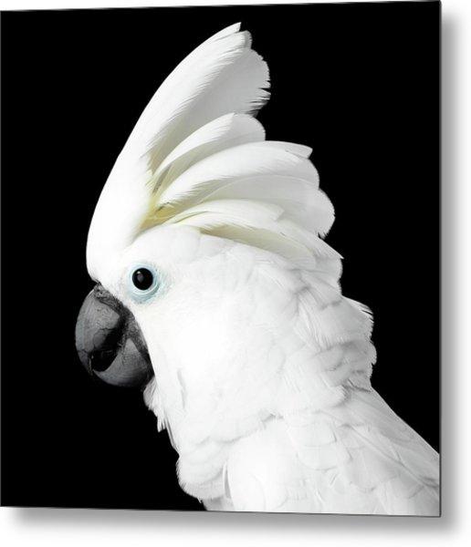 Cockatoo Alba Metal Print