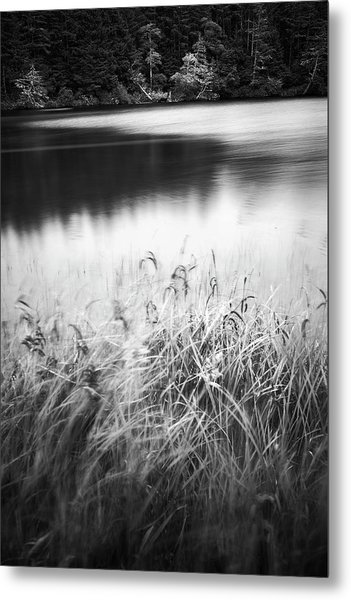 Metal Print featuring the photograph Coffenbury Lake by Whitney Goodey
