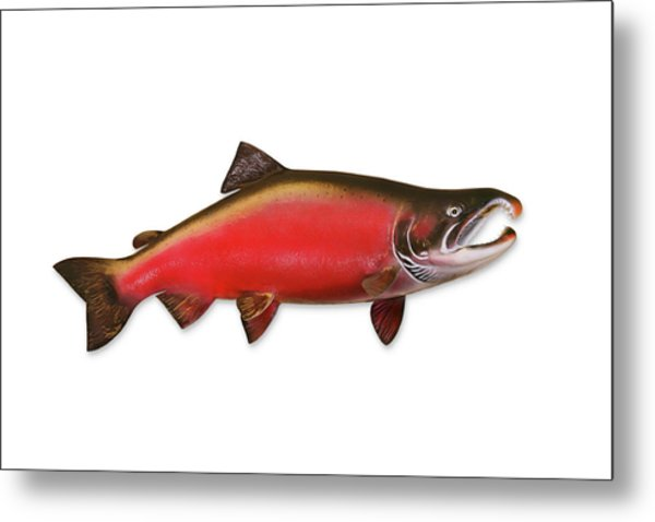 Coho Salmon With Clipping Path Metal Print by Georgepeters