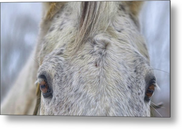 Cold Outside Metal Print by JAMART Photography