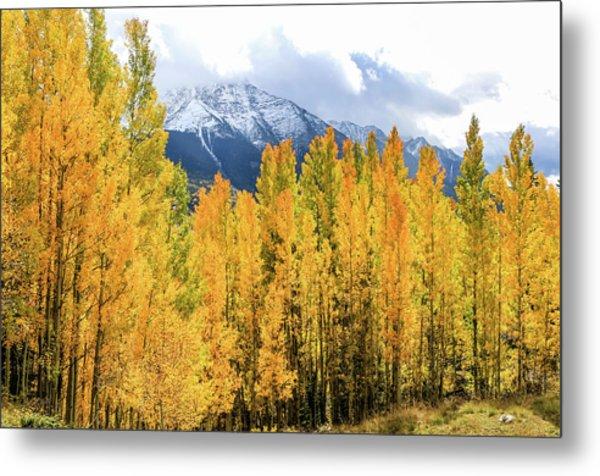 Colorado Aspens And Mountains 1 Metal Print