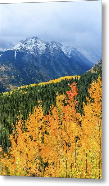 Colorado Aspens And Mountains 4 Metal Print