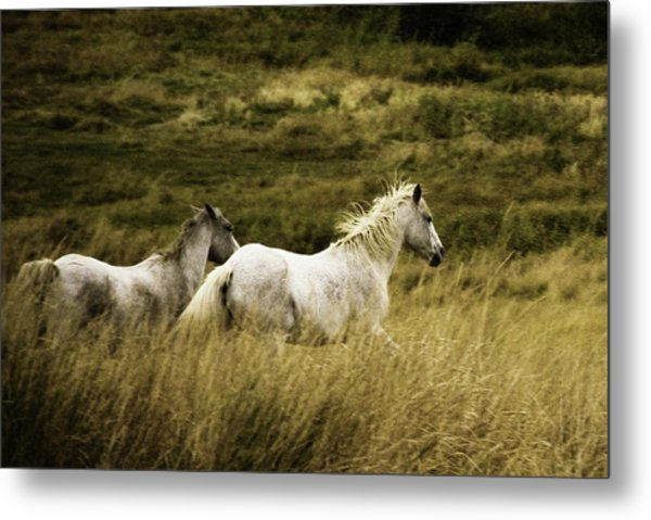 Colorado Horses Metal Print