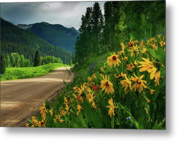 Colorado Wildflowers Metal Print