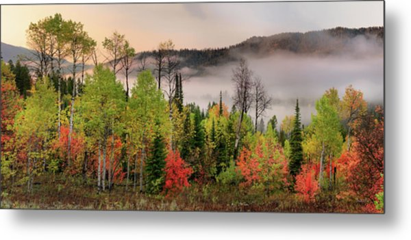 Colorful Autumn Morning Metal Print by Leland D Howard