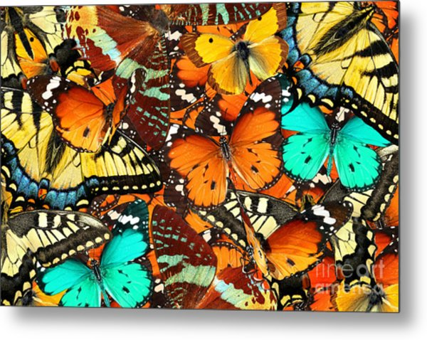 Colorful Butterflies Background. Nature Metal Print