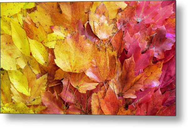 Colors Of Fall - Yellow To Red Metal Print