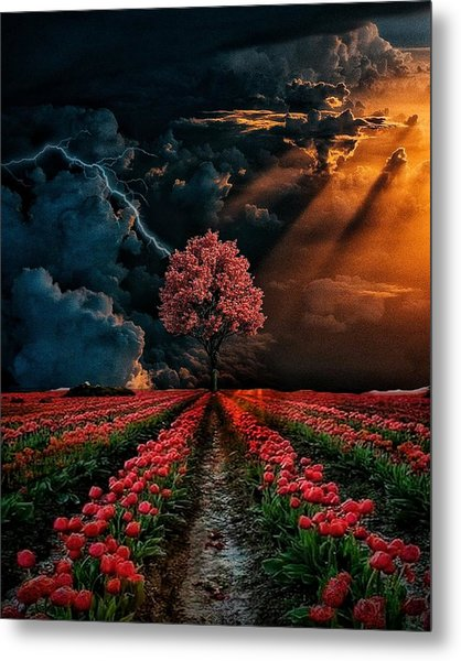 Colours Of The Sky Metal Print
