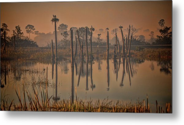 Cool Day At Viera Wetlands Metal Print