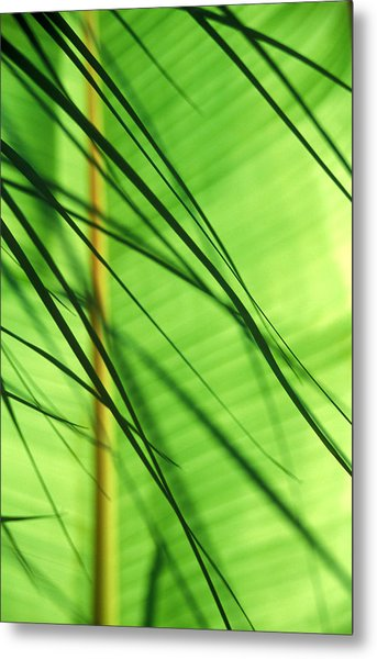 Cordyline Fronds In Front Of Banana Metal Print