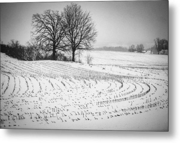 Corn Snow Metal Print