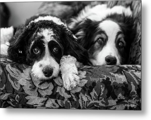 Couch Potatoes Metal Print