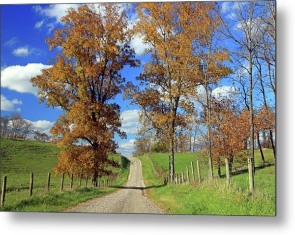 Metal Print featuring the photograph Country Road Through Fall Trees by Angela Murdock