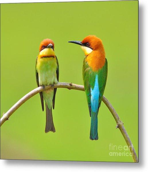 Couple Of Bee Eater Bird Metal Print