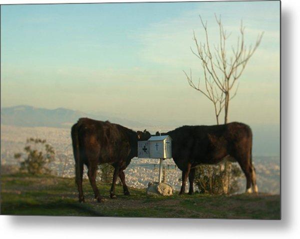 Cow Romance Metal Print