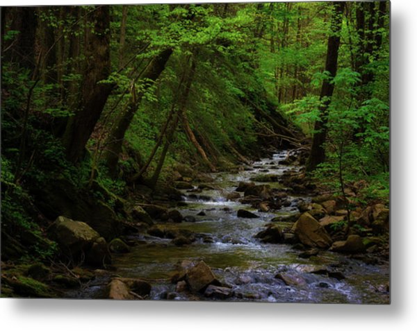 Creek Flowing Through Shady Forest Metal Print