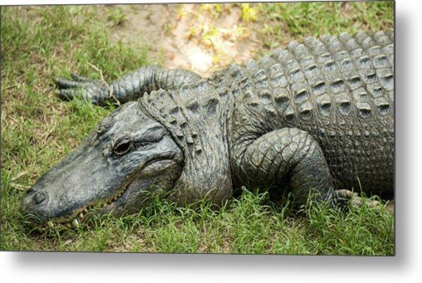 Crocodile Outside Metal Print