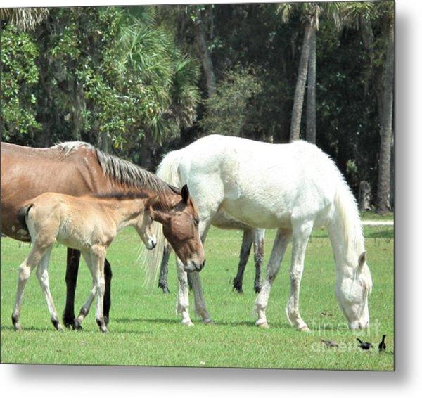 Cumberland Horses Family Portrait Metal Print