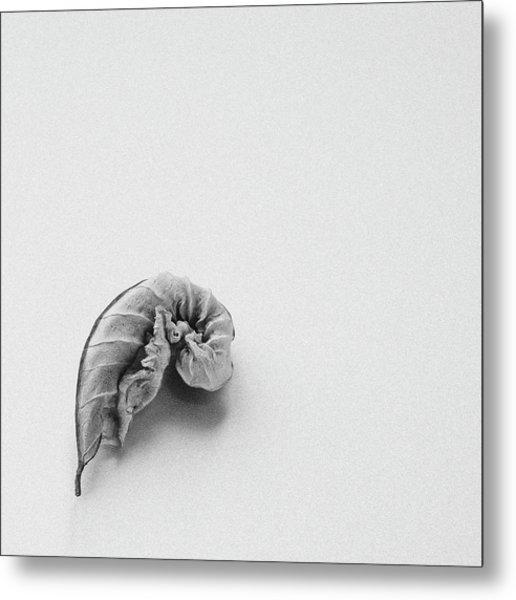 Curled Leaf - Fine Art Photograph Metal Print