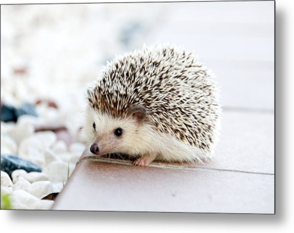 Cute Hedgeog Metal Print
