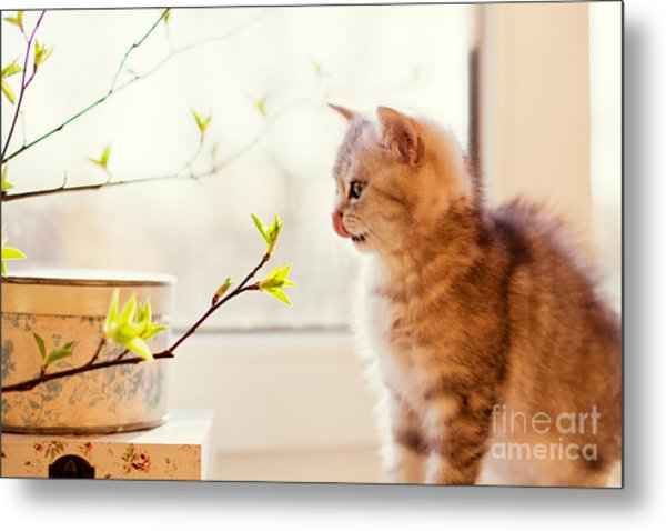 Cute Little Kitty Playing With Green Metal Print