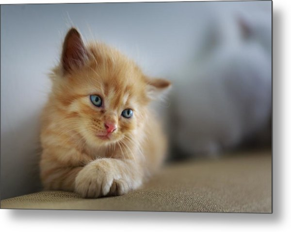 Cute Orange Kitty Metal Print