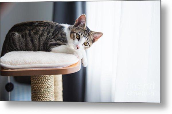 Cute Tabby Kitten Relaxing On Top Of Metal Print