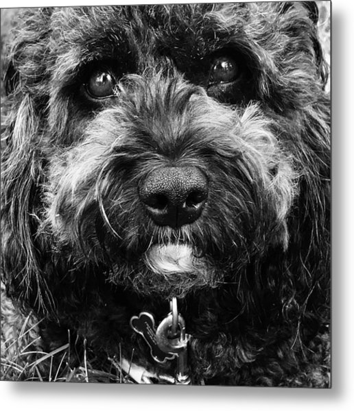 Cutest Dog On The Planet Metal Print